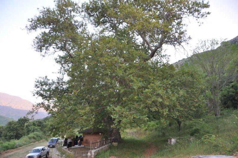 Λειτουργία στή κουφάλα ἑνός δένδρου